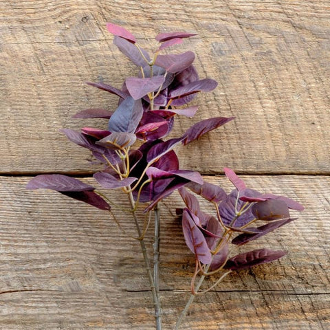 Burgundy Smokebush Stem