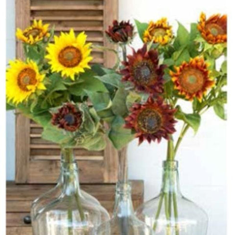 Sunflower Stems