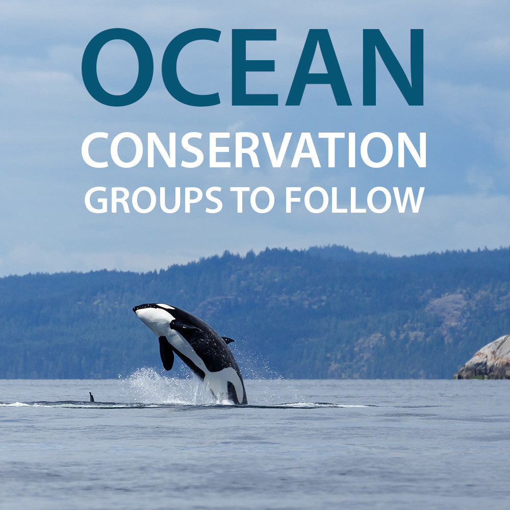 Ocean Conservation Groups to Follow