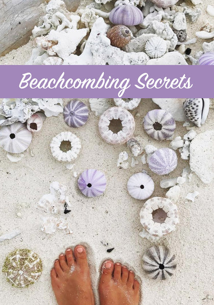 Beachcombing Secrets, How to find beautiful shells