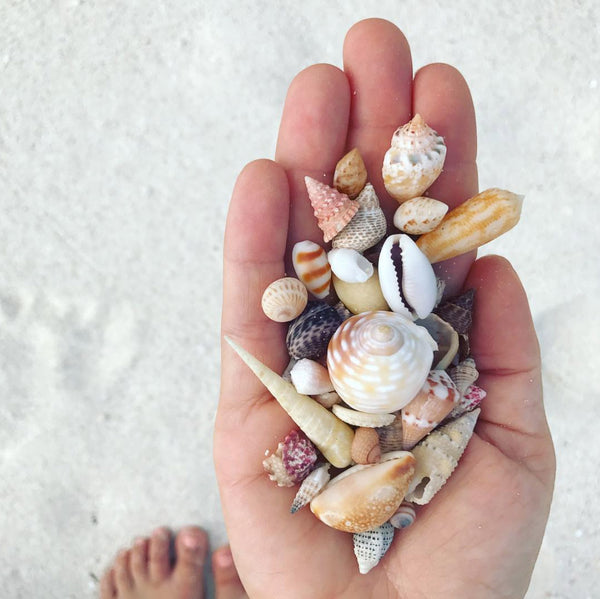 Handful of Seashells