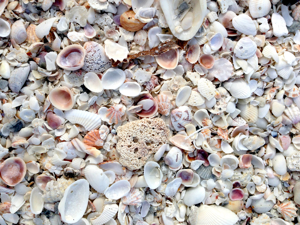 Sanibel Shells