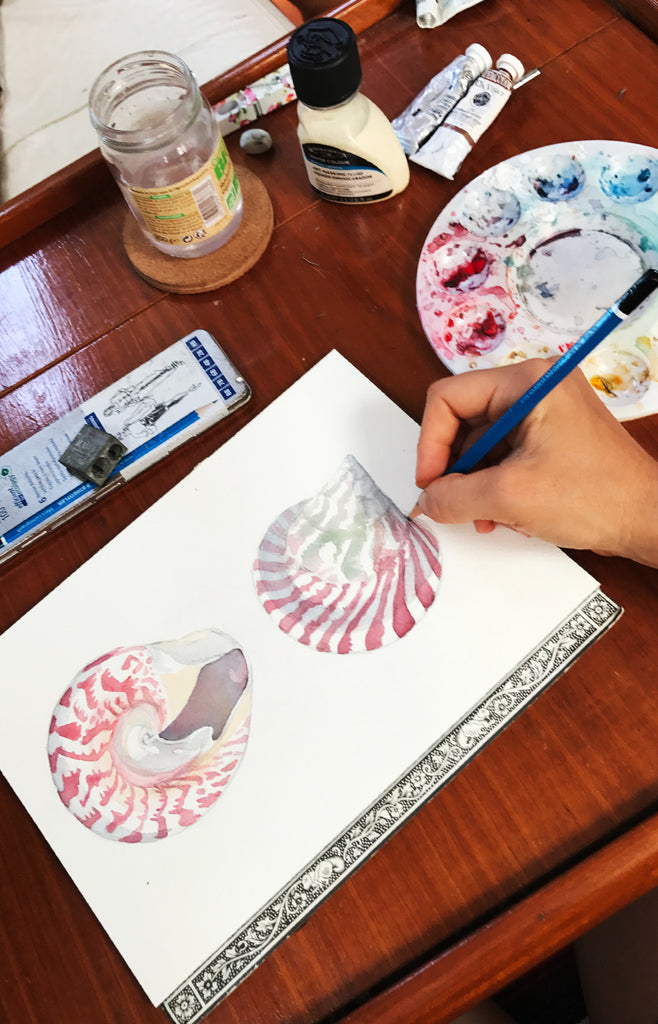 Top shell watercolor painting