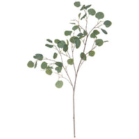 Tall Eucalyptus Branch