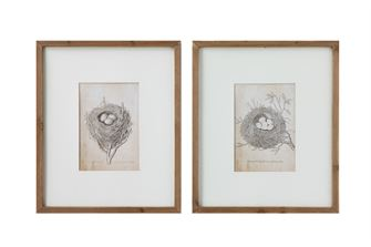 Nest and Egg Framed Print