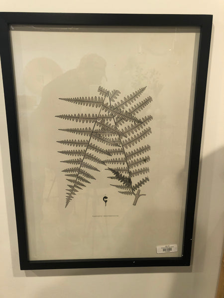 Black & White Fern Study