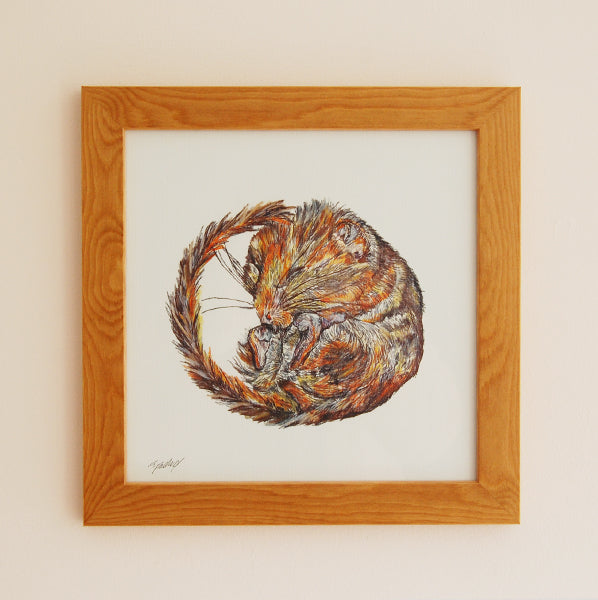 Dormouse Illustration Print