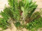 Live Aquarium freshwater plants   - 50 stems - Aquarium and Pond Plants