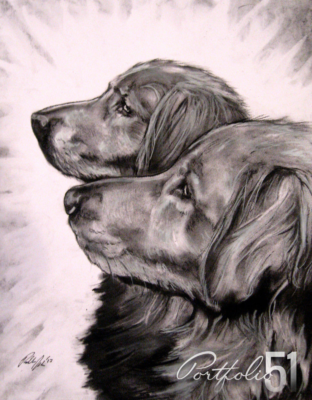 Portfolio 51 Golden Retrievers Drawing