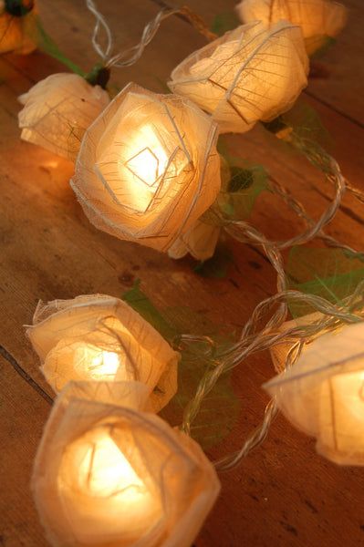 Cream Cabbage Rose Fairy Lights