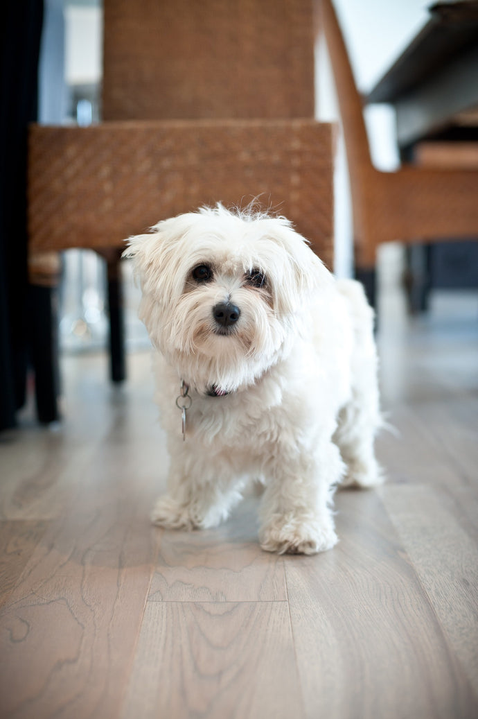 Best Flooring Options for Pets