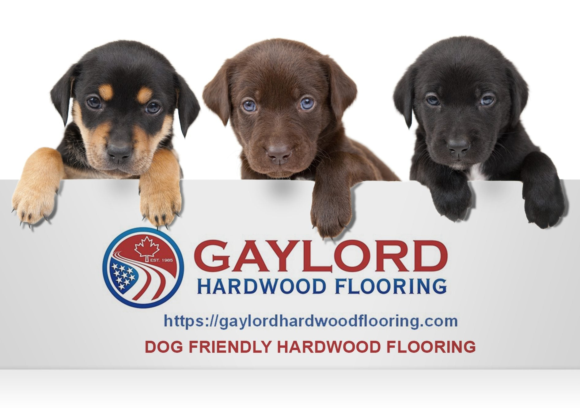 dog friendly wood flooring