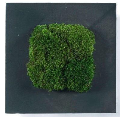 Enchanted Moss Art
