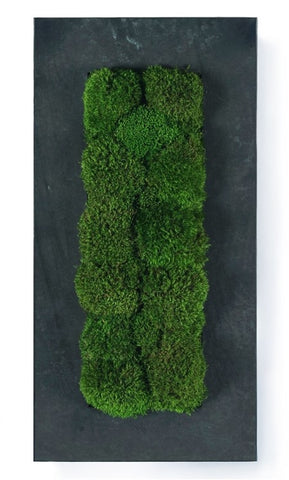 Equinox Moss Art, Large