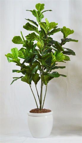 Mod Fig Tree