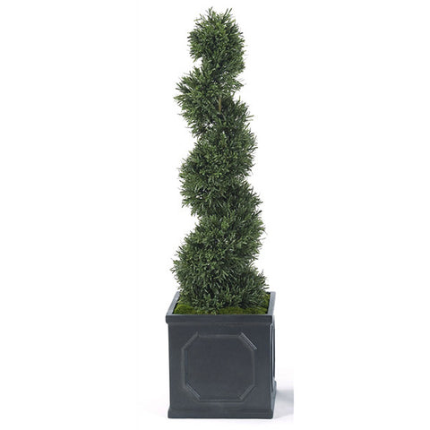 Spiral Rosemary in Square Planter
