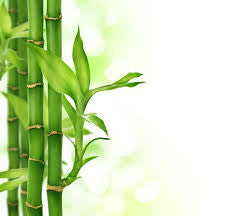 10 things You (Probably) Don't Know About Bamboo