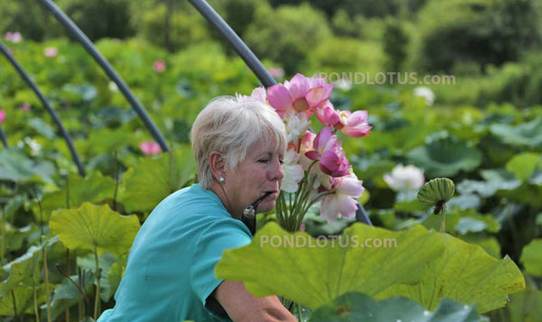Growing_Sacred_Lotus_Buy_Plants_Flowers