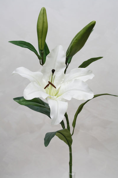 Rubrum Lily White