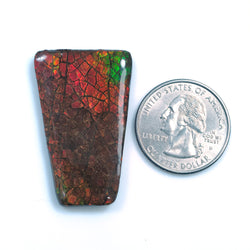 Rare Fire AMMOLITE Gemstone Cabochon :43.20ct Natural Fossilized Shell Multi Color Ammolite Trapezium Shape Cabochon 39*25mm 1pc For Jewelry