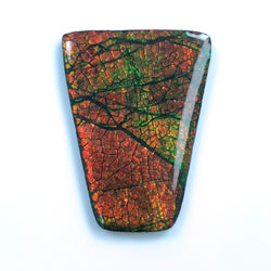 Rare Fire AMMOLITE Gemstone Cabochon : 80cts Natural Fossilized Shell Multi Color Ammolite Uneven Shape Cabochon 46.5*35mm 1pc For Jewelry
