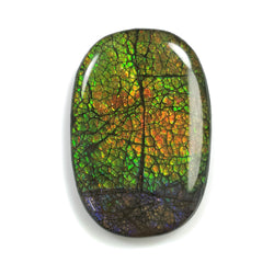 Rare Fire AMMOLITE Gemstone Cabochon : 100.85cts Natural Fossilized Shell Multi Color Ammolite Oval Shape Cabochon 50*32mm 1pc For Jewelry