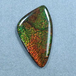 Rare Fire AMMOLITE Gemstone Cabochon : 74.80cts Natural Fossilized Shell Multi Color Ammolite Uneven Shape Cabochon 54*31mm 1pc For Jewelry