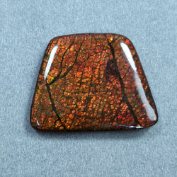 Rare Fire AMMOLITE Gemstone Cabochon :56.90ct Natural Fossilized Shell Multi Color Ammolite Trapezium Shape Cabochon 29*36mm 1pc For Jewelry