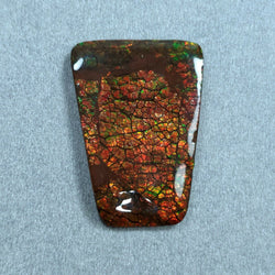 49.10cts Natural Rare Fossil Shell Multi Color Fire AMMOLITE Gemstone Uneven Shape Cabochon 26*37mm For Jewelry