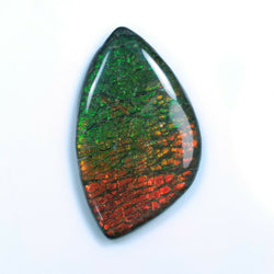 69.00cts Natural Rare Fossil Shell Multi Color Fire AMMOLITE Gemstone Uneven Shape Cabochon 52*31mm For Jewelry