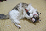 Big Wine Cat Toys with Japanese Silvervine-Catchy_boutique
