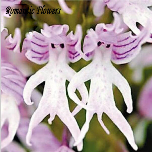 Funny Alien Plant Flower! 50pcs of Alien Seeds To Plant into Orchids - the Weird Store - 2