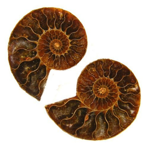 Ammonite Pair Madagascar 3.5cm