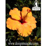 Hibiscus Flower- Sunflower Co.