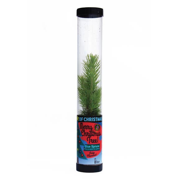 Living Christmas Tree | Blue Spruce | Packaged Live Tree