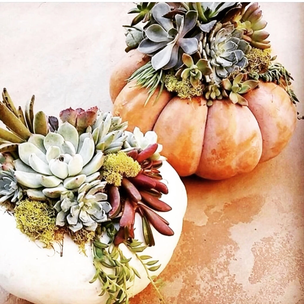 Thanksgiving Pumpkin Centerpiece Workshop with Samantha's Garden