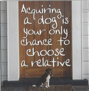 Acquiring a dog is your only chance