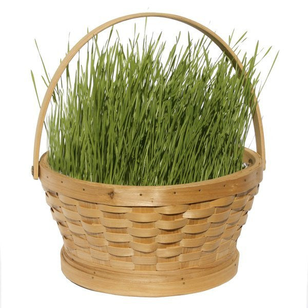 Grow Your Own Easter Grass Kit