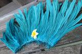 Coque feathers 12-14 inch length, for Tahitian dance costumes