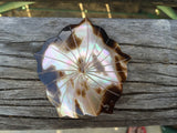 Brown lip flower pendant, mother of pearl shell