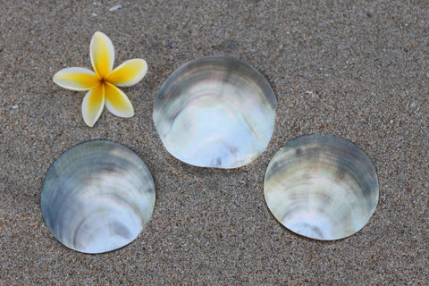 3-4  inch round blacklip mother of pearl shell-one shell