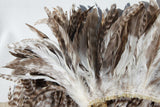 Coque feathers 8-10 inch length, for Tahitian costumes