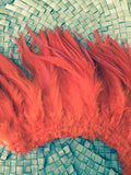 Long saddle feathers 5-8 inches in length