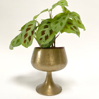 Vintage Brass Chalice / Plant Stand