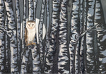 Owl in Birch Trees