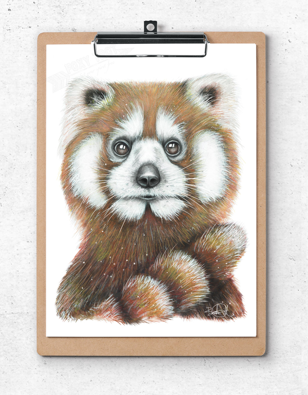 Mr Red the Red Panda