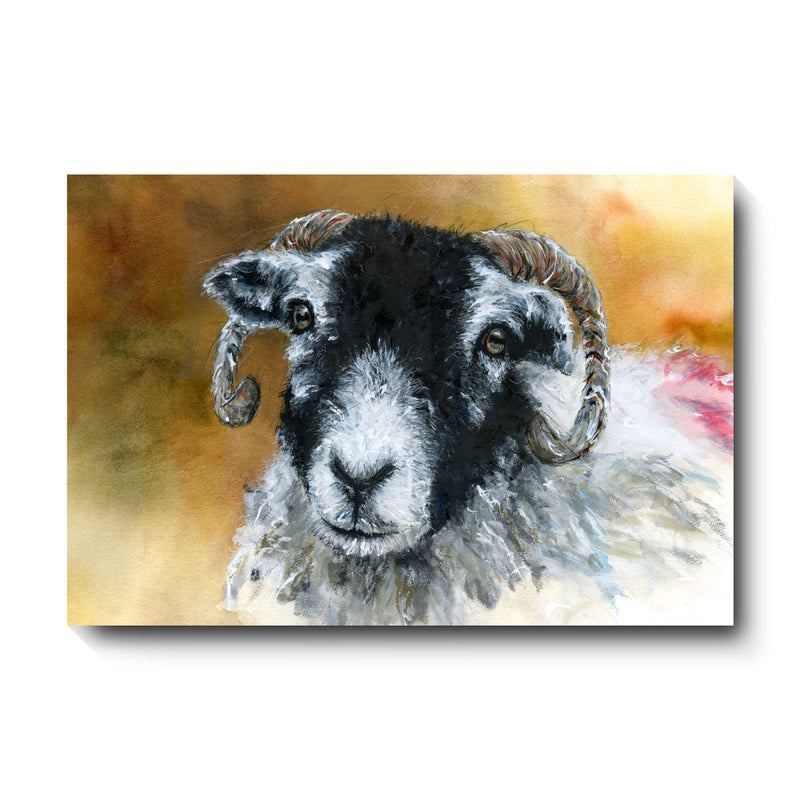 David Pooley Art Swaledale Sheep Canvas Large 81 x 61cm