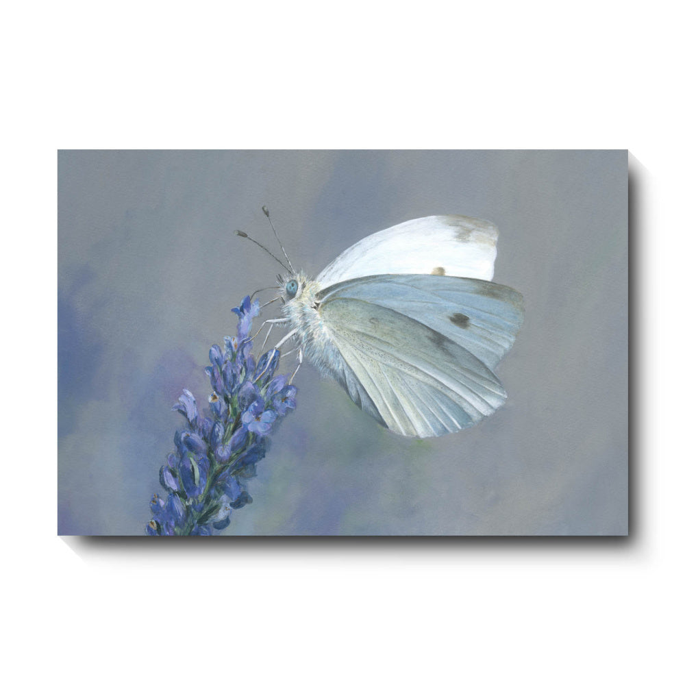David Pooley Art Cabbage White Canvas 61 x 41cm