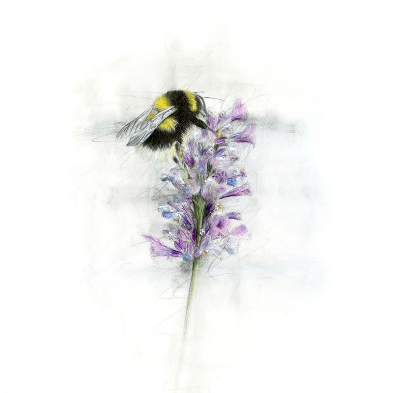 David Pooley Art Barry Bumble Bee A3 Print