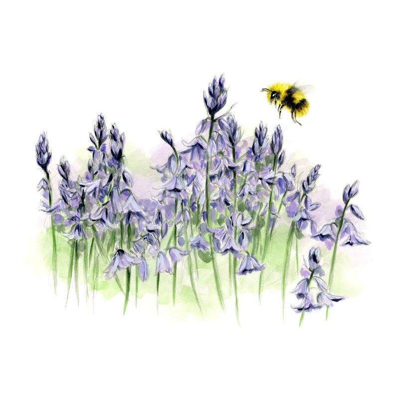 David Pooley Art Bluebells and Bee A3 Print